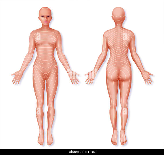 Dermatome Stock Photos Amp Dermatome Stock Images Alamy