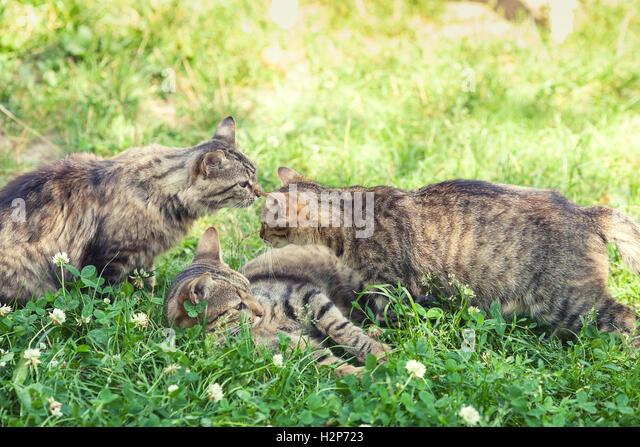Kittens Fauna Stock Ph...
