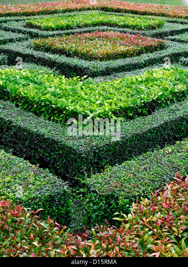 Hedge Hedging Box Stock Photos Hedge Hedging Box Stock Images