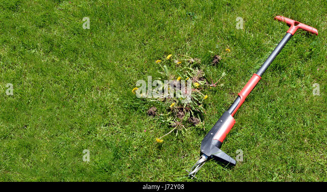 Removal of weeds stock photos removal of weeds stock for Garden maintenance tools