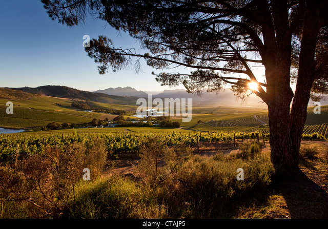 Sunris stock photos sunris stock images alamy for Jardin winery south africa
