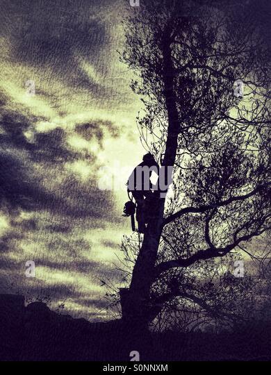 how to become a tree climber arborist