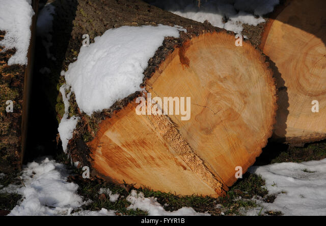 Tilia bark stock photos images alamy