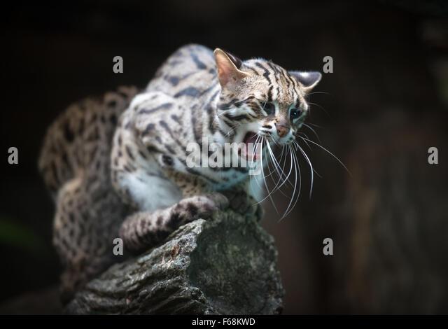 The Cat S Meow Edinburgh