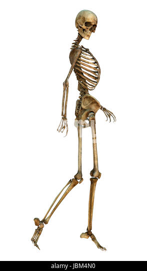3d digital render human skeleton stock photos & 3d digital render, Skeleton