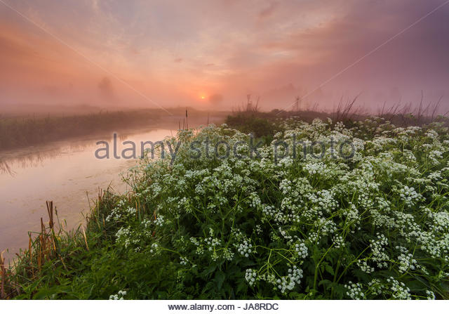 Misty dawn on the river bank with flowers - Stock Image