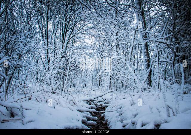 Trees Covered Snow Winter Wonderland Stock Photos Amp Trees Covered Snow Winter Wonderland Stock