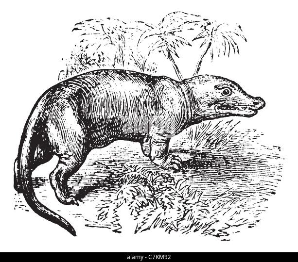 megalosaurus vintage engraved illustration trousset encyclopedia 1886 1891 stock image