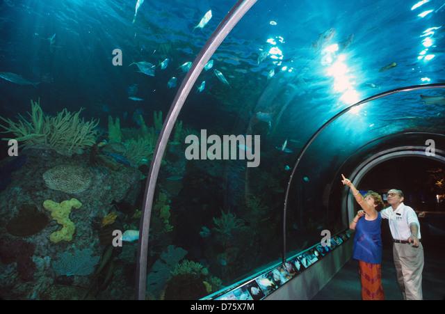 Audubon Aquarium Stock Photos Audubon Aquarium Stock
