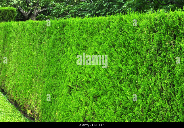 Tall Hedge Stock Photos Tall Hedge Stock Images Alamy