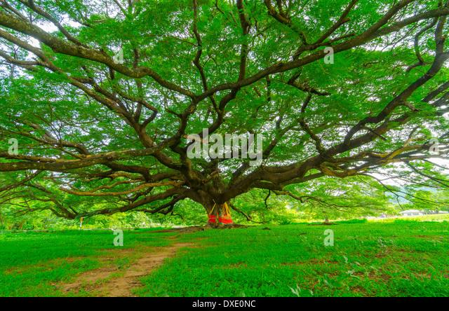 spring green three trees - photo #21