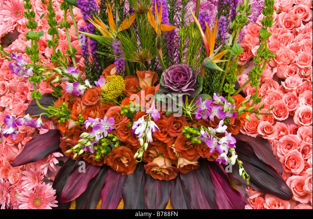Protea Fresh Tropical Flower Dark Orange Pink Rose Roses Ecuadorian Copper Maize Valentines Day Bird