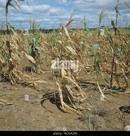 The serious hunger probelm of two african third world countries ethiopia and sudan