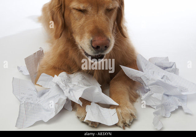Do dogs actually eat homework