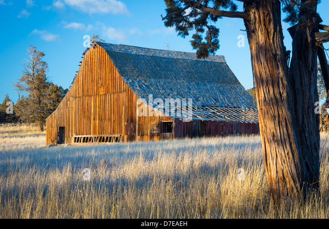 Tree house oregon stock photos tree house oregon stock for Barn builders oregon
