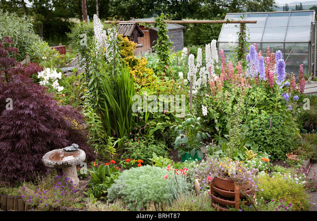 Allotment Flowers Stock Photos Allotment Flowers Stock Images Alamy