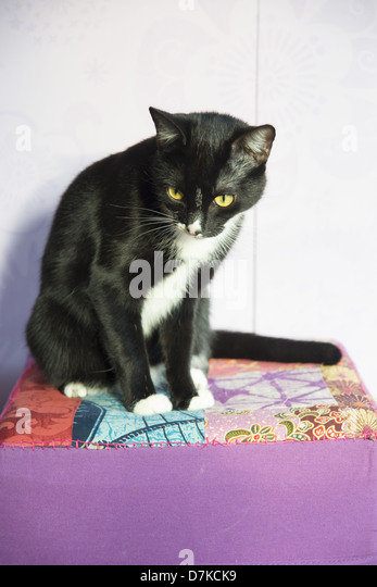 Berühmt Chat Noir Stock Photos & Chat Noir Stock Images - Alamy GL23