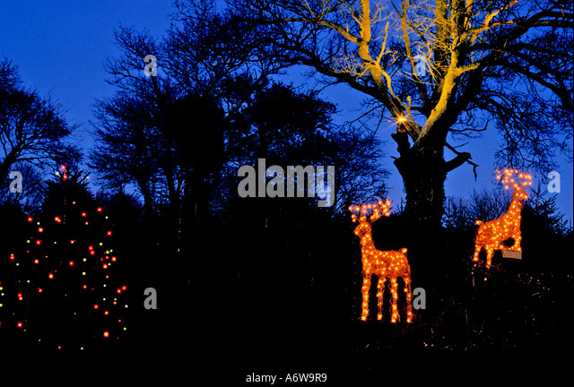 Christmas Tree Cultivation Stock Photos & Christmas Tree ...