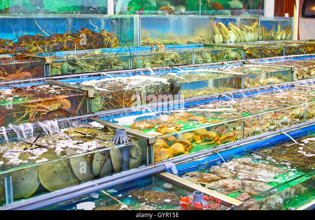 Seafood tank stock photos seafood tank stock images alamy for Fish market albany ny