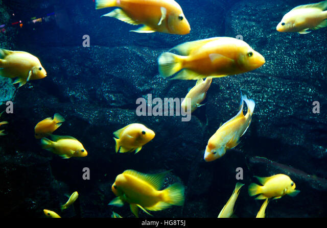 Fische stock photos fische stock images alamy for Aquarium fische im gartenteich