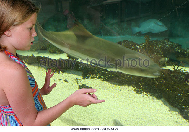 Estuarium Stock Photos Estuarium Stock Images Alamy