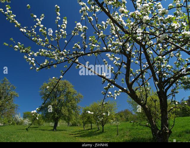 spring green three trees - photo #17