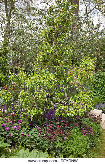 Designer adam frost stock photos designer adam frost for Garden trees homebase