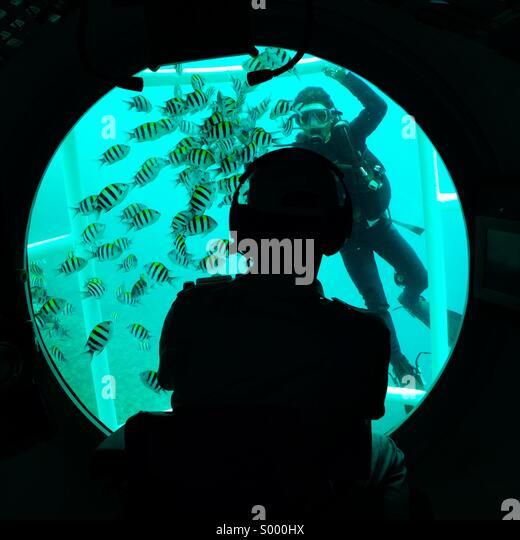 Pilot Fish Stock Photos & Pilot Fish Stock Images - Alamy