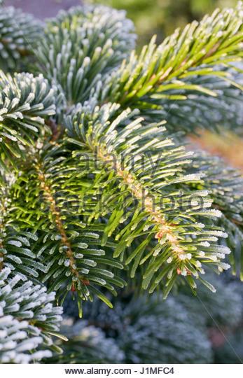 Christmas Tree Farm In Kent