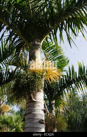 Viera y clavijo stock photos viera y clavijo stock - Jardin botanico las palmas ...