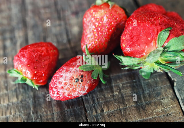 Rotten Strawberries Fungal Decay Stock Pho...