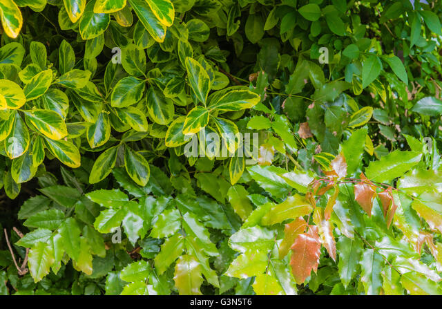 Woods Forest. Trees Background. Green Nature Landscape. Wilderness ...