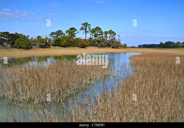 Softwood Trees In Florida ~ Hardwood trees stock photos images