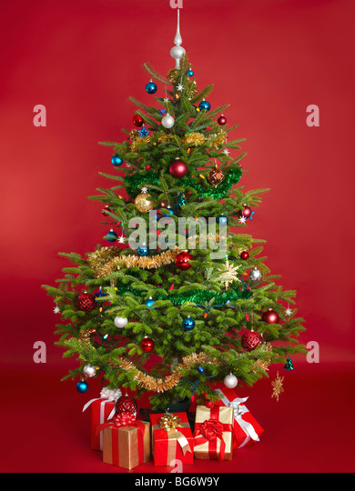 decorated real christmas tree isolated on red background stock image