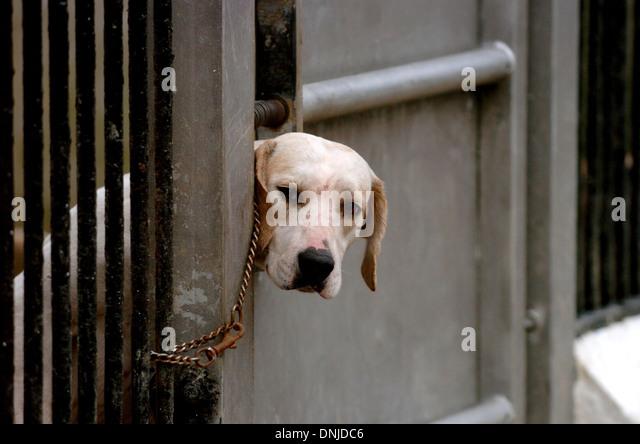 Dog Kennels Near Broadway