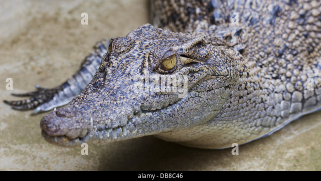 croc dundee film analysis essay What a croc most aussies were  like ansell, crocodile dundee had a tendency to embroider tales of his adventures  if my abilities of analysis are.