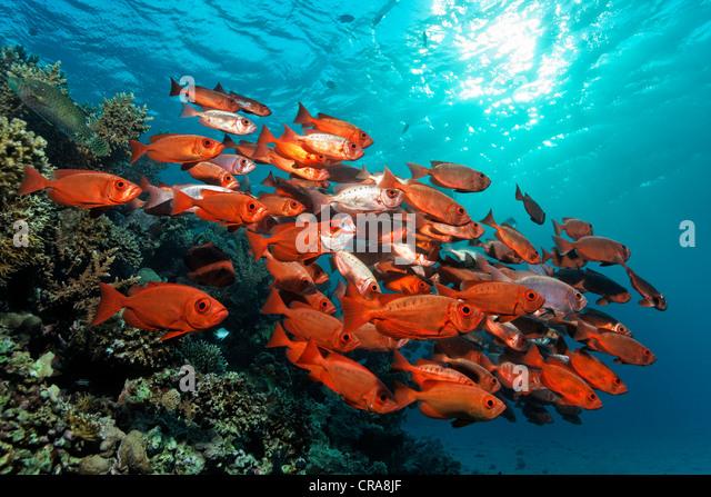 School of fish in ocean for School of fish