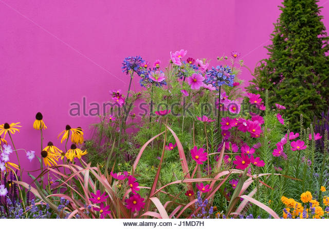 flower pharmaceuticals Download 10,305 pharmaceutical plant stock photos for free or amazingly low rates new users enjoy 60% off 85,810,360 stock photos online  chamomile flowers .