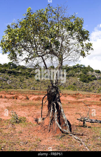 Roots in soil stock photos roots in soil stock images for Example of soil