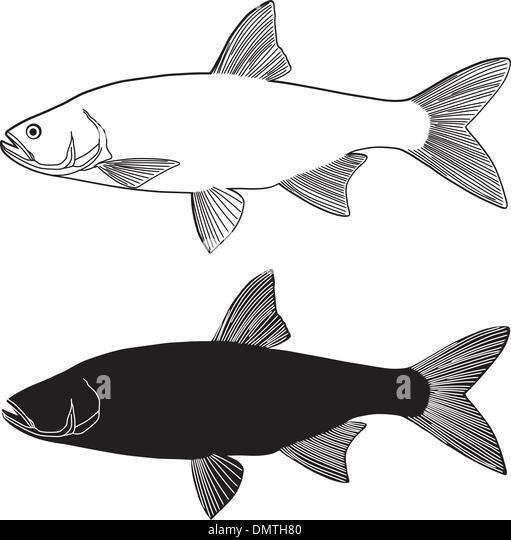 Predatory fish stock photos predatory fish stock images for Predatory freshwater fish