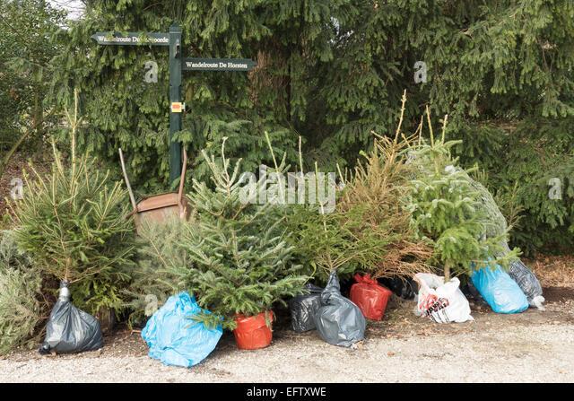 Christmas Tree Trees Nursery Stock Photos & Christmas Tree Trees ...