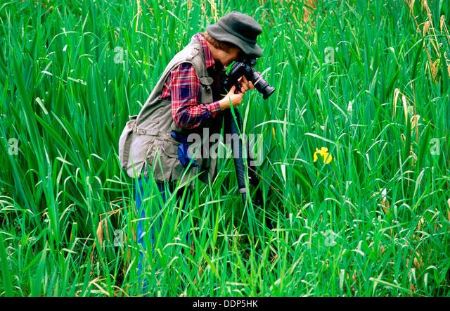 Fleur de lis stock photos fleur de lis stock images alamy for Chambre de commerce de mont tremblant