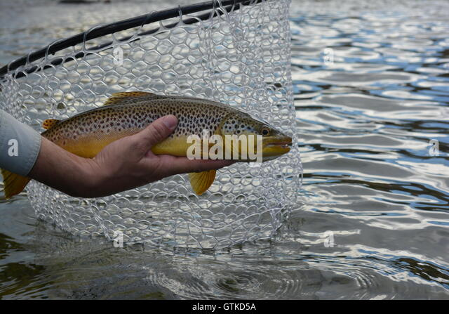 Green river utah fishing stock photos green river utah for Trout fishing utah