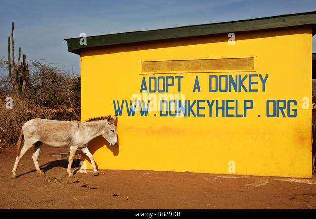 Image result for netherland donkey