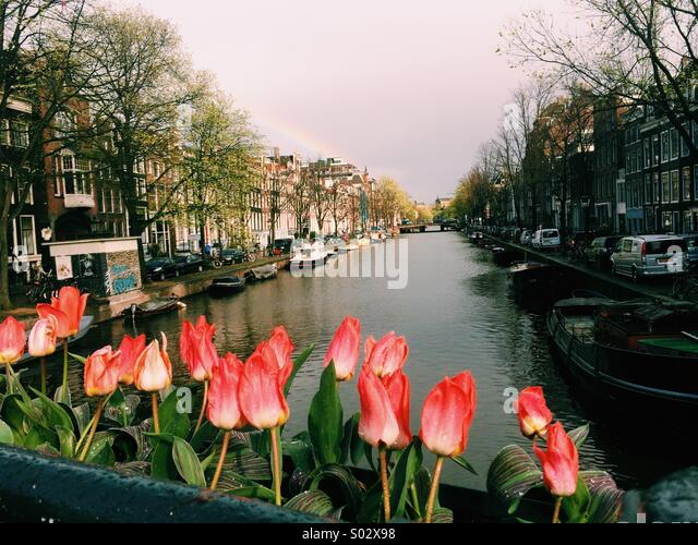 Amsterdam Tulips Canal Stock Photos Amp Amsterdam Tulips