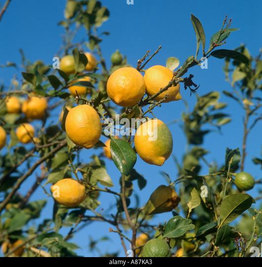 near alicante spain stock photos near alicante spain