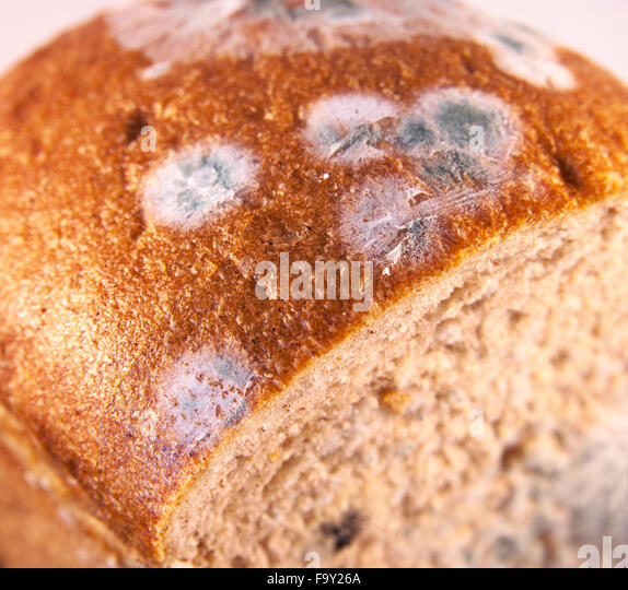 how to grow bread mould