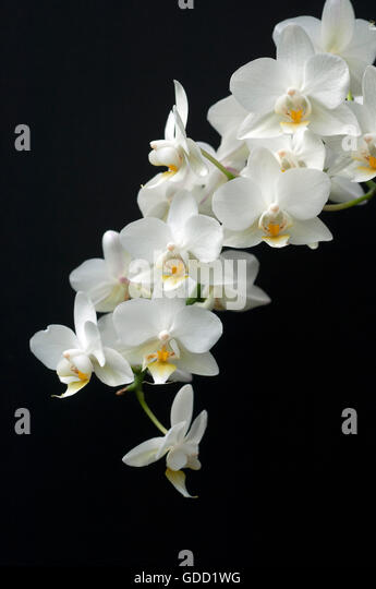weisse blume stock photos weisse blume stock images alamy. Black Bedroom Furniture Sets. Home Design Ideas
