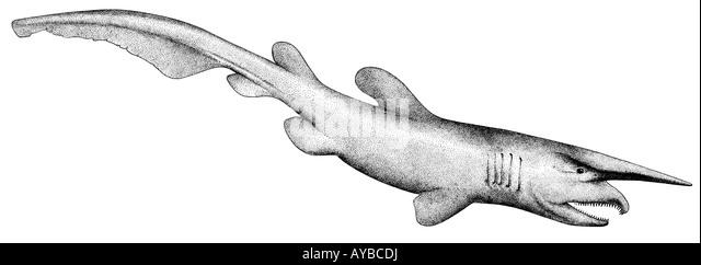 goblin shark mitsukurina owstoni drawing stock image