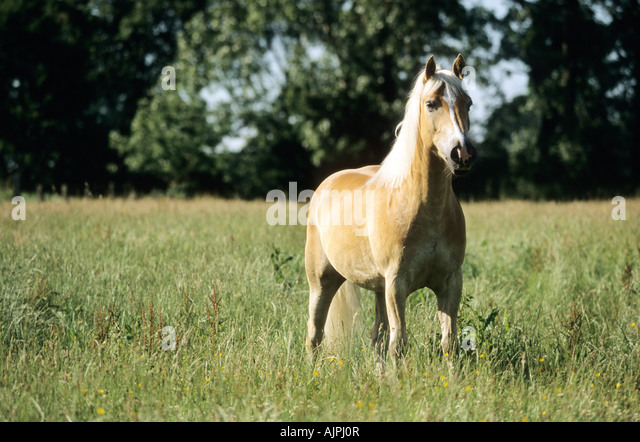 Horse Stock Photos & Horse Stock Images - Alamy